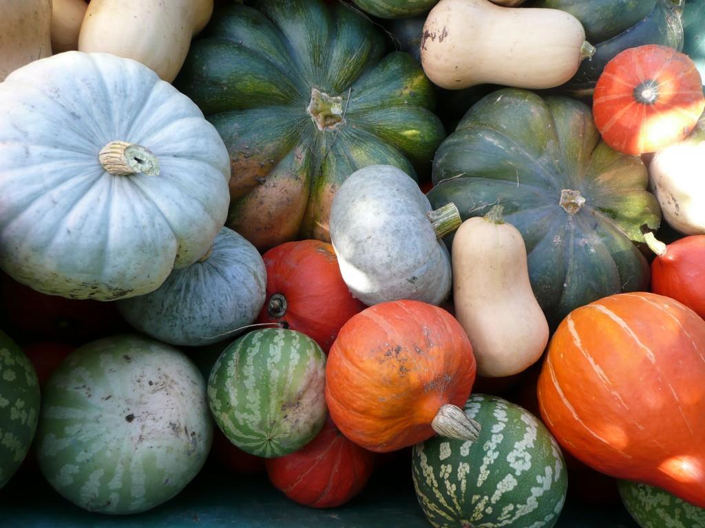 cucurbitacées de la ferme des Genêts. Différentes variétés .