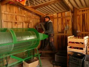 Jonathan Villien trie les châtaignes à la ferme des Genêts, à Arlebosc ,07410,bArdèche.